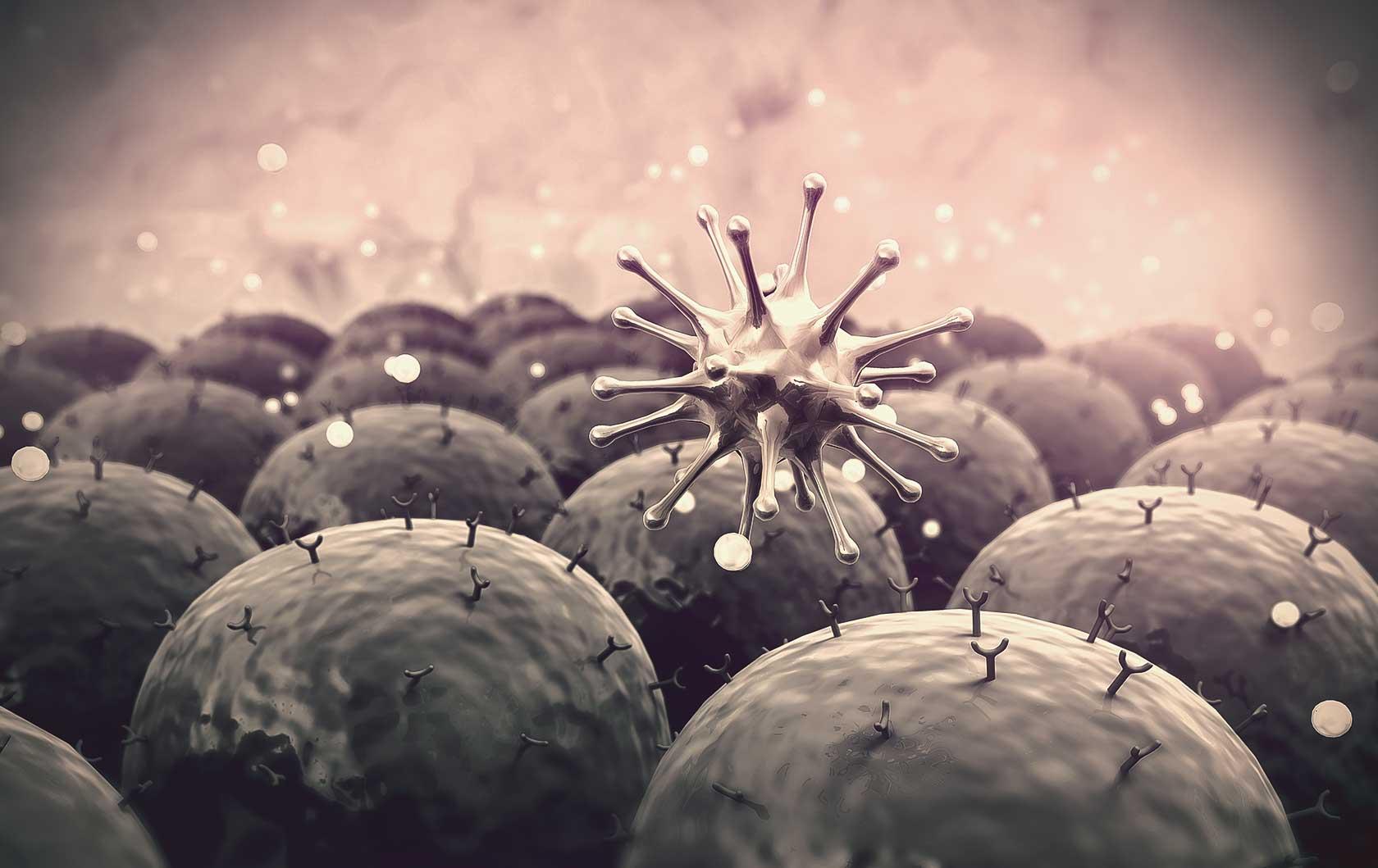 Immune System & Gut Health