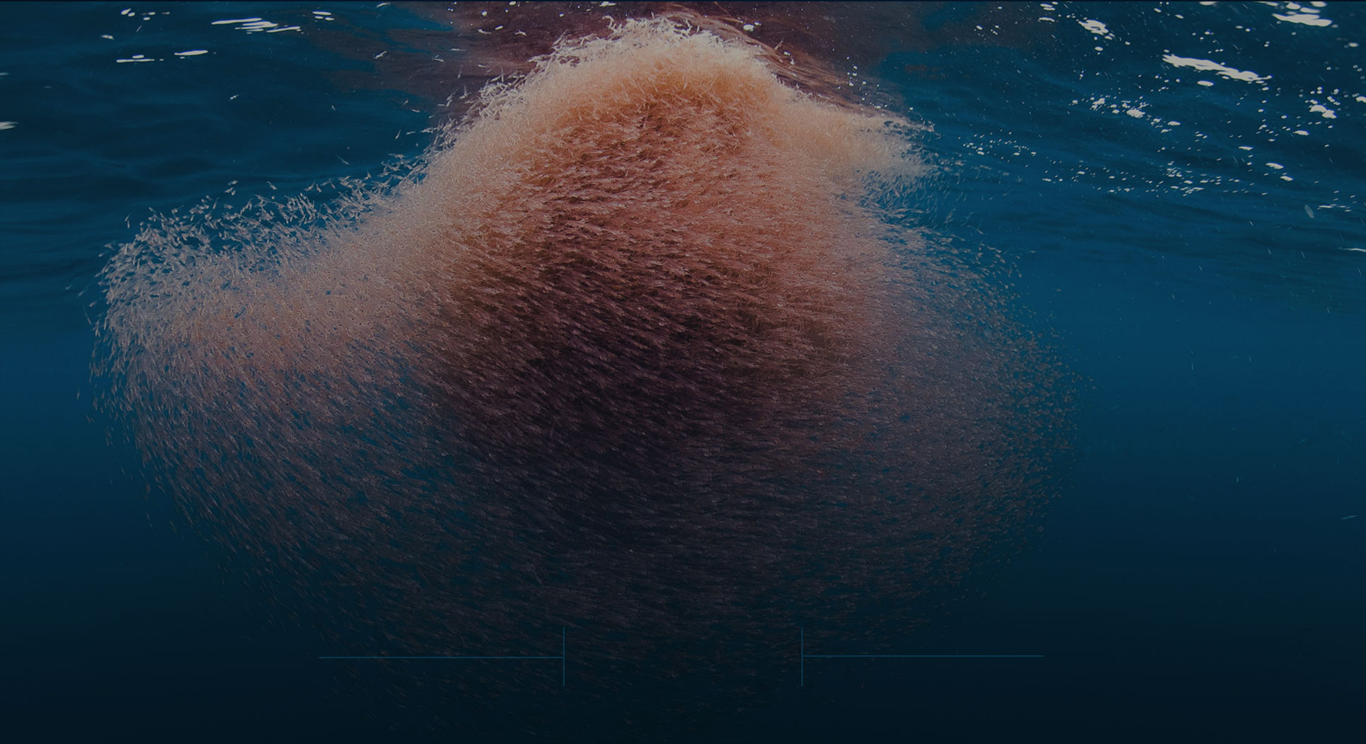 Krill oil vs fish oil what you need to know onnit academy for Krill or fish oil