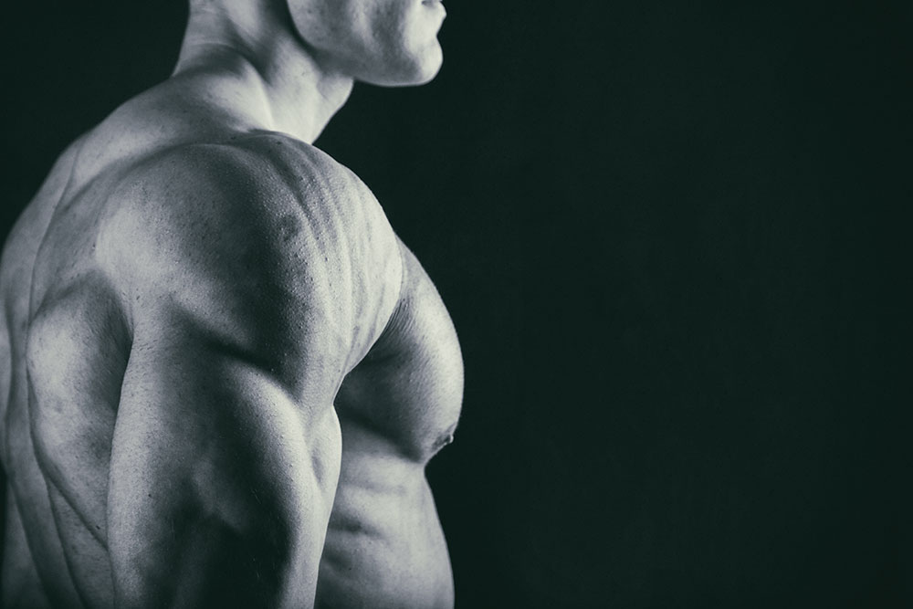 The Best Chest and Triceps Workouts for Building Muscle